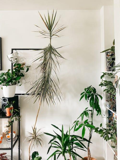 Foto stok gratis Apartemen, aroma, aromatik, bagian dalam