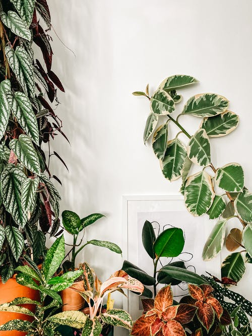 Collection of potted plants at home