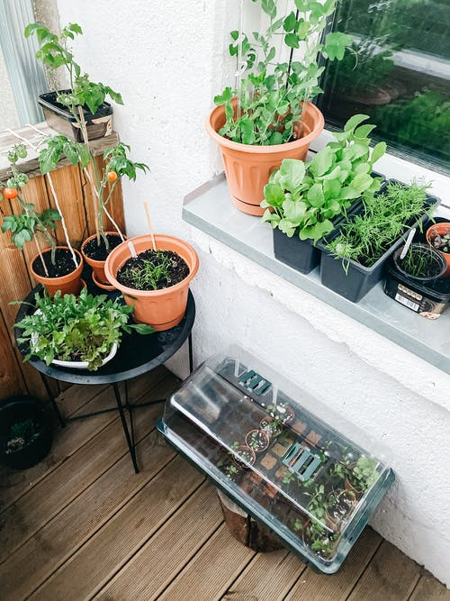 Various potted houseplants placed on windowsill and table at home