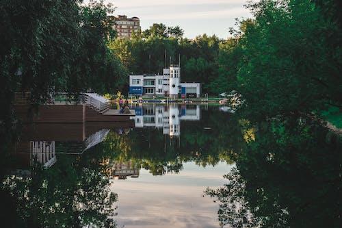 Free stock photo of зеленый, Москва, природа фотография
