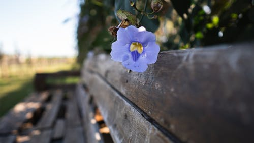 Blue and White Flower on Brown Wooden Bench