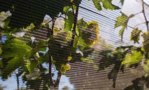 Green Tree Branch on White Net