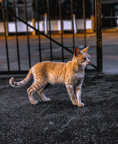 Безкоштовне стокове фото на тему «amoureux des animaux, amoureux des chats, amoureux des chiens»