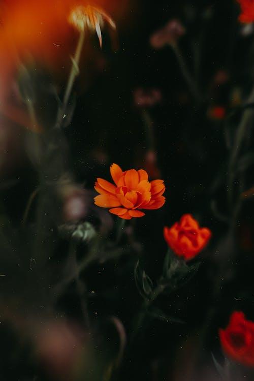 Foto d'estoc gratuïta de # flor, #flors, #naturalesa, a l'aire lliure