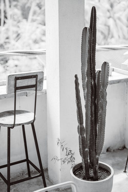 Бесплатное стоковое фото с белый и черный, ботанический, горшок