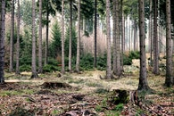 wood, nature, forest