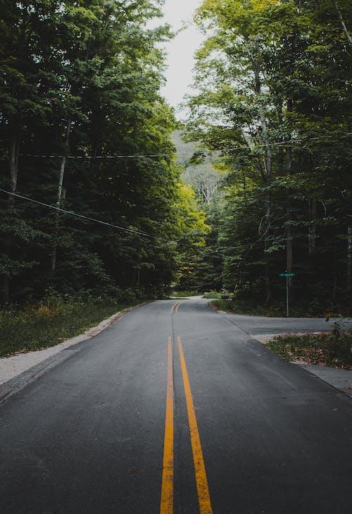 Imagine de stoc gratuită din arbore, armonios, asfalt, autostradă