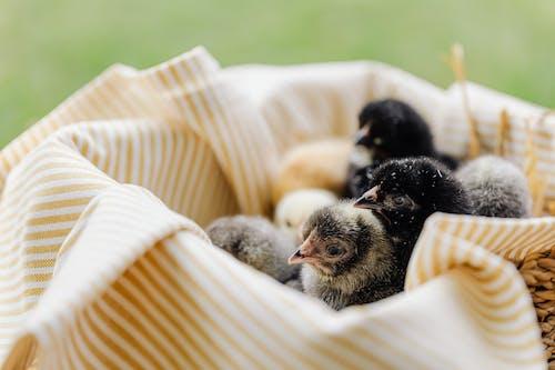 Ingyenes stockfotó állat, aranyos, baba témában
