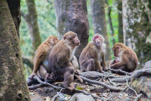 Free stock photo of animals, group of monkeys, monkeys