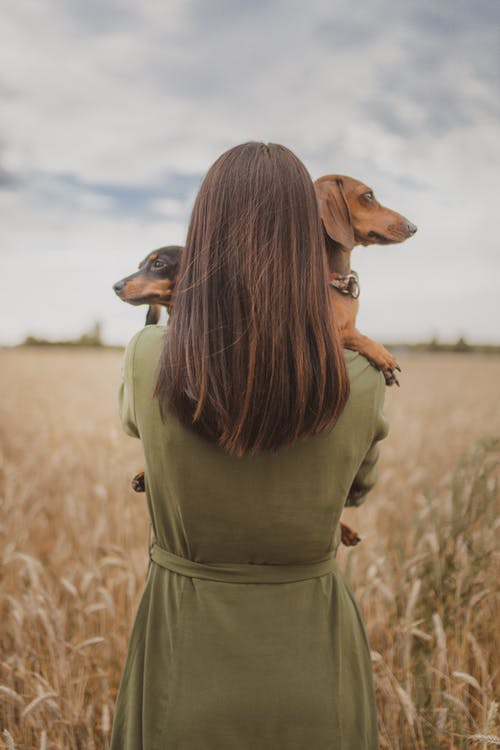 Anonymous woman with Dachshund dogs relaxing in wheat field