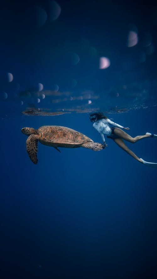Full body of unrecognizable female diver in swimsuit swimming in oxygen mask near large turtle with bubbles on water surface