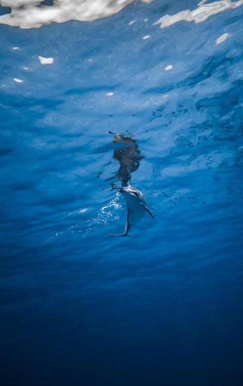 Dolphin swimming underwater in sea
