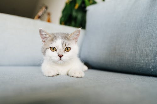 White and Grey Cat on Grey Textile
