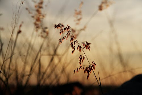 Free stock photo of colors, evening photos, evening shots, grass