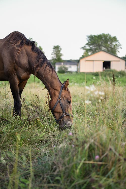 Horse eating grass on pasture