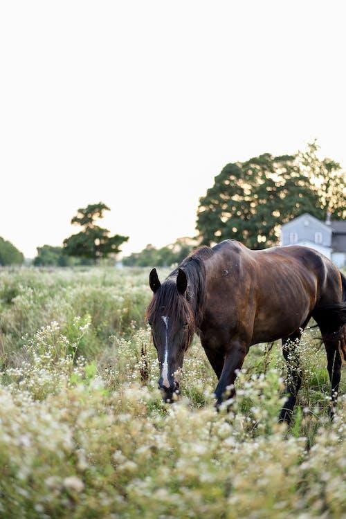 Black horse grazing in pasture in farmland