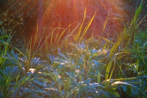 Immagine gratuita di natura, paypass, высокая трава, природа