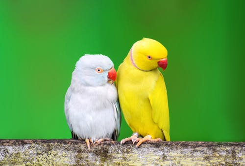 White and Yellow Bird on Brown Wooden Post