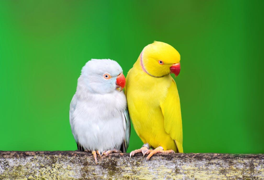 Gratis stockfoto met aviaire, beest, buiten