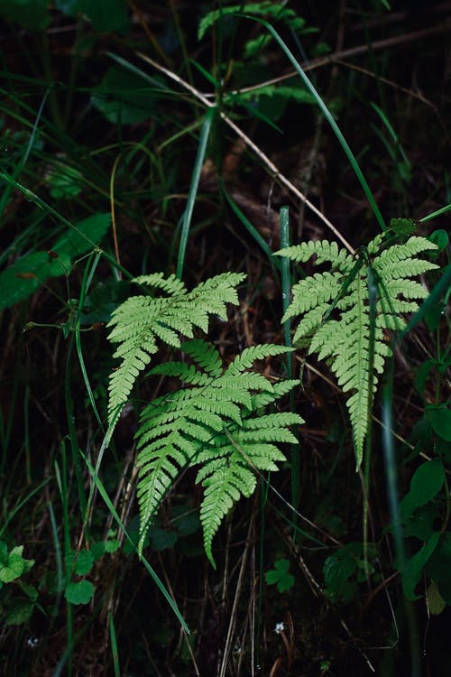 Fern leaves growing on ground