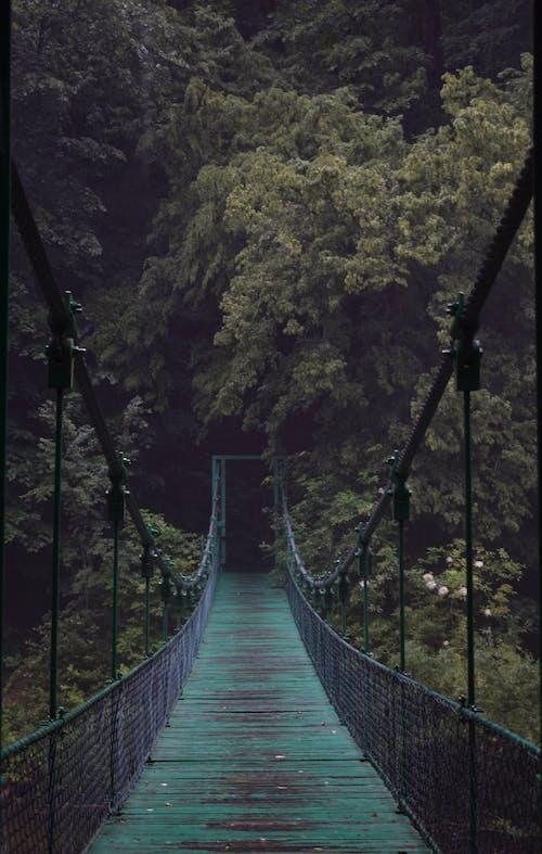 Immagine gratuita di albero, ambiente, asse