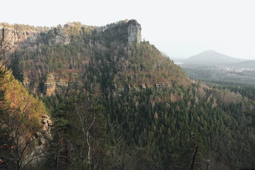 Kostenloses Stock Foto zu bäume, berg, natur, wald