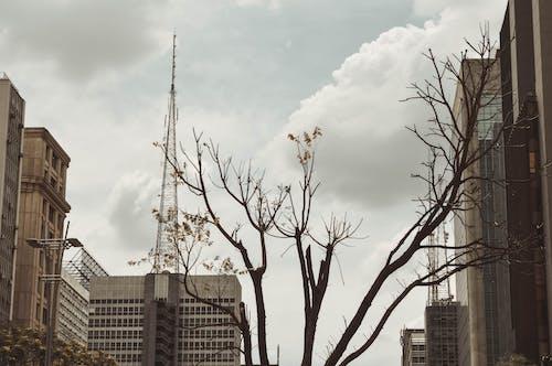 城市, 大都市, 秋城, 秋天 的 免费素材图片