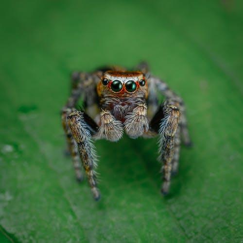 ь, 令人不寒而慄的, 令人毛骨悚然的, 動物 的 免费素材图片