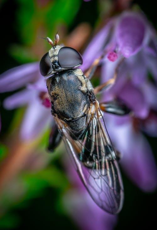 Gratis lagerfoto af antenne, bi, biologi, blomst
