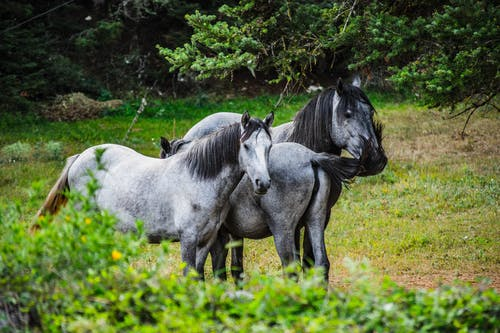 Free stock photo of αλογοουρά