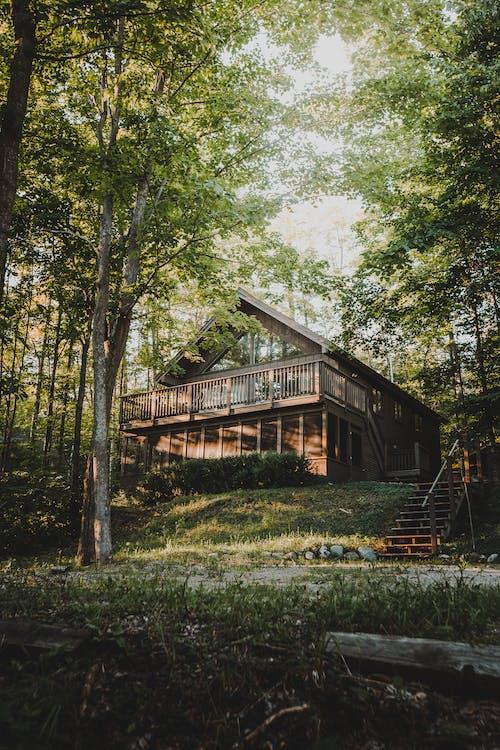 Ingyenes stockfotó domb, erdő, fa, gerendaház témában