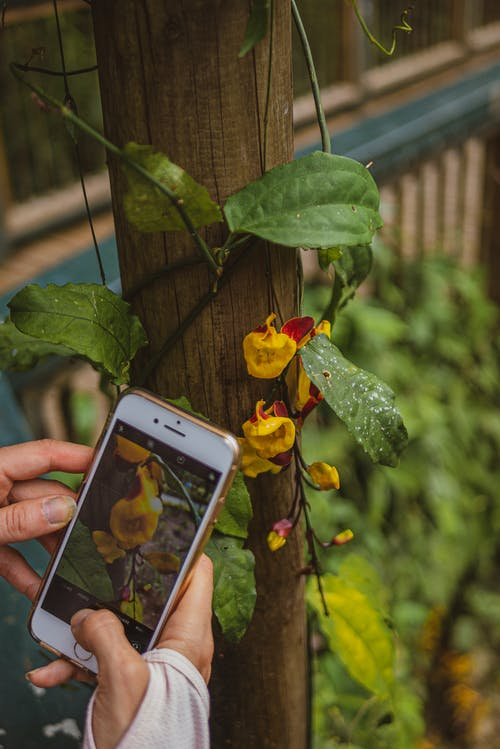 Free stock photo of botany, cellphone, floral, flowers