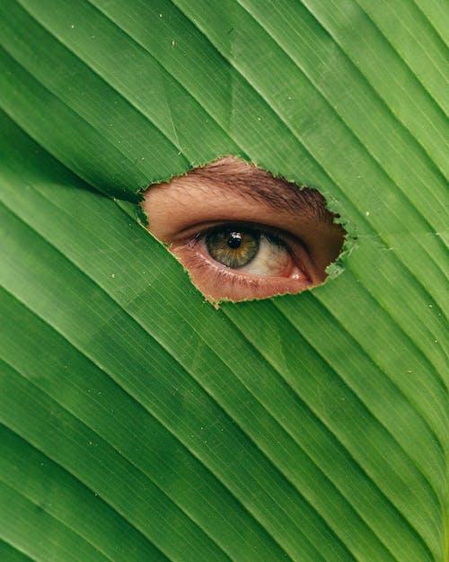 Human Eye on Green Banana Leaf