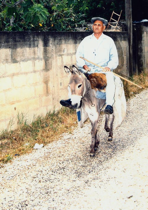 Free stock photo of donkey, mule, old man
