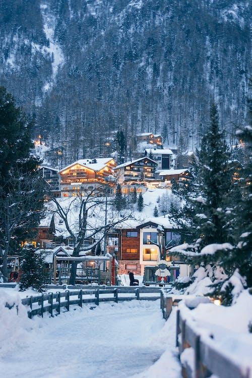 冬季樹木附近的棕色和白色房屋