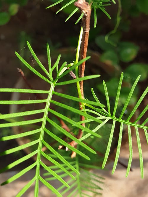 Foto stok gratis boa pohon hijau, gigitan python pohon hijau, hijau