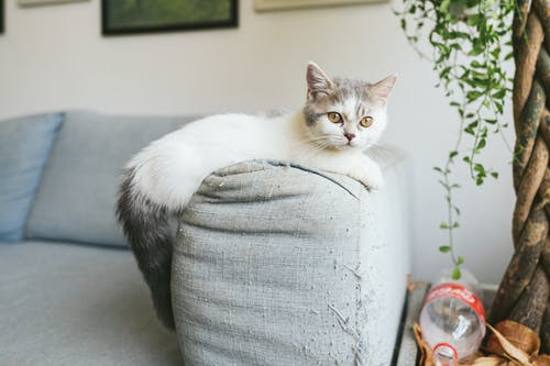 White and Black Cat on White Sofa