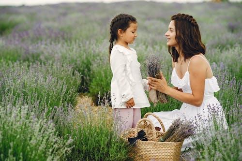 Gratis stockfoto met binden, bloemenveld, buiten