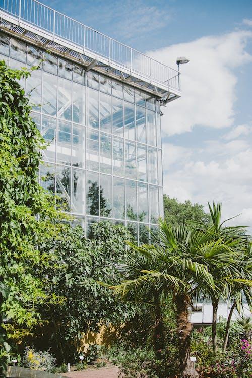 Green Trees Near Glass Building