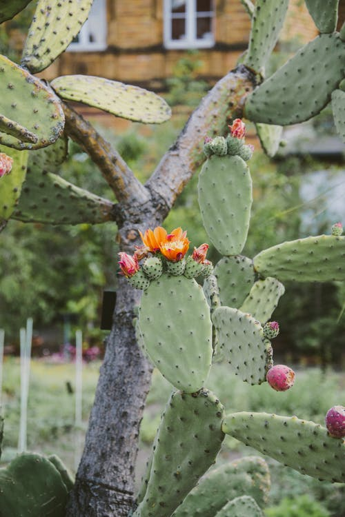 Green Cactus With Red Flower