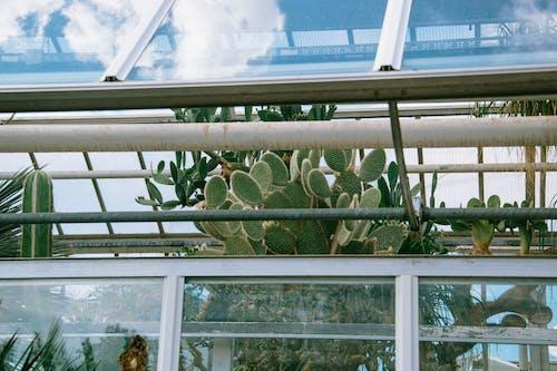 Green Plant Near White Wooden Framed Glass Window