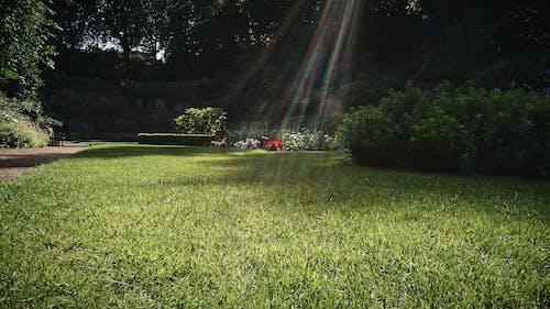 Gratis lagerfoto af blomster, græs, græsplæne, grønt græs