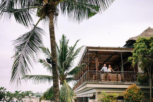 Photos gratuites de arbre, bord de mer, complexe, complexe hôtelier