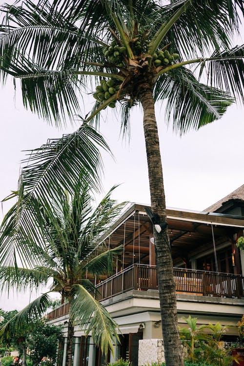 Photos gratuites de arbre, bâtiment, bord de mer, building