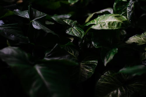 Green leaves of plant in darkness