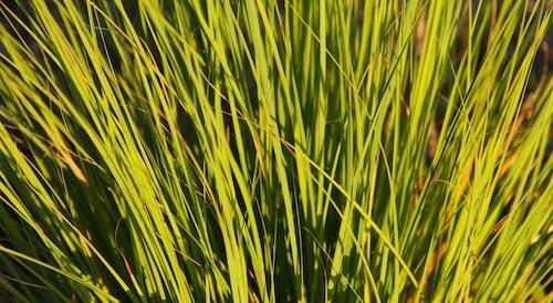 Free stock photo of #grass, #green, #lighting, #nature