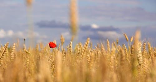 Δωρεάν στοκ φωτογραφιών με αγρόκτημα, γεωργία, γήπεδο