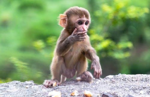 Brown Monkey Sitting on Gray Rock