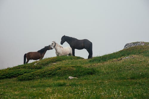 Black and White Horses on Green Grass Field
