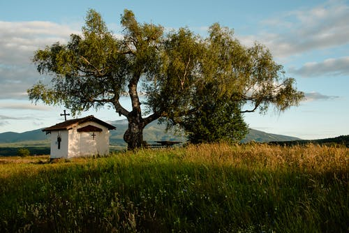 Green Grass Field With Green Trees and White Wooden House